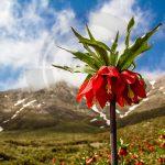 نگاه برتر تور عکاسی چیلیک | گلستان کوه خوانسار | عکاس: اعظم حشمتی
