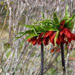 نگاه برتر تور عکاسی چیلیک | گلستان کوه خوانسار | عکاس: مریم خداوردی