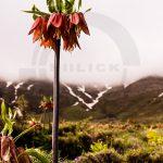 نگاه برتر تور عکاسی چیلیک | گلستان کوه خوانسار | عکاس: صبرا محمدنژاد