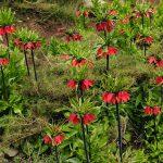 نگاه برتر تور عکاسی چیلیک | گلستان کوه خوانسار | عکاس: سروش رحمانی