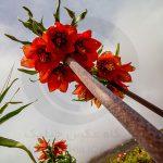 نگاه برتر تور عکاسی چیلیک | گلستان کوه خوانسار | عکاس: مهری راست قدم