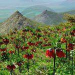 نگاه برتر تور عکاسی چیلیک | گلستان کوه خوانسار | عکاس: محمدرضا زارع