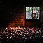 عکاس: سید مهرداد شریفی، مسابقه عکس خانه روستایی، عکس برگزیده بخش مسکن معیشت محور