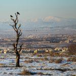 عکاس: شاهین حیدری تواسانی   راه یافته به بخش چهره شهر هفتمین جشنواره عکس فیروزه تبریز