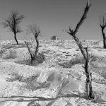 عکاس: محمد درکاهی  راه یافته به بخش چهره شهر هفتمین جشنواره عکس فیروزه تبریز