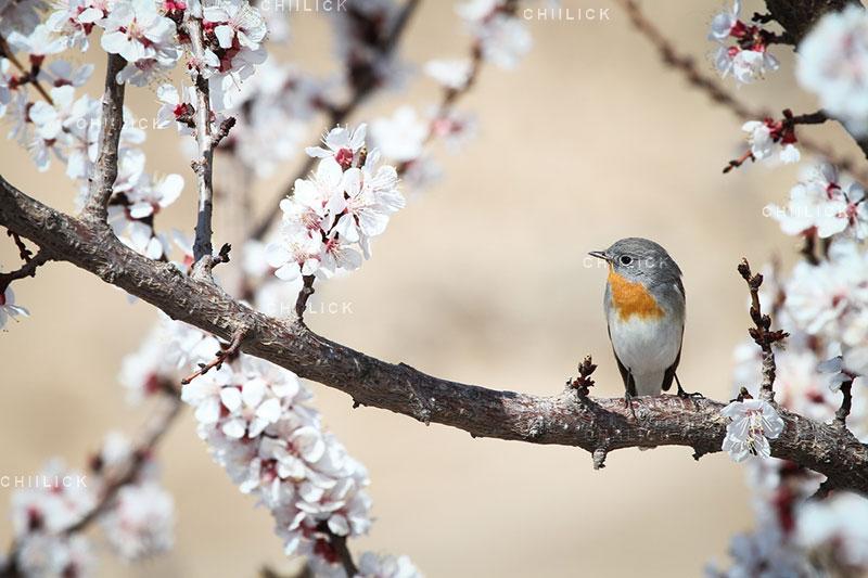 جشنواره سراسری شمیم بهار - آرش شکورزاده ، راه یافته به بخش آماتور | نگارخانه چیلیک | ChiilickGallery.com