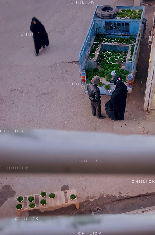 جشنواره سراسری شمیم بهار - امیر عنایتی ، راه یافته به بخش حرفه ای | نگارخانه چیلیک | ChiilickGallery.com
