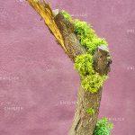 جشنواره سراسری شمیم بهار - عباس حیدری ، راه یافته به بخش حرفه ای | نگارخانه چیلیک | ChiilickGallery.com