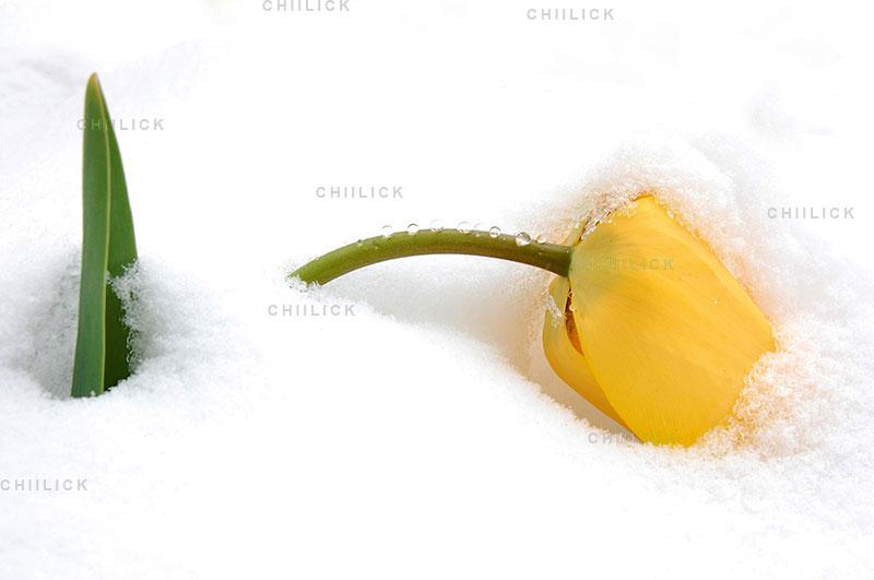 جشنواره سراسری شمیم بهار - عبدالرحمان مجرد ، راه یافته به بخش حرفه ای | نگارخانه چیلیک | ChiilickGallery.com