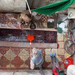 جشنواره سراسری شمیم بهار - مهدی پورنصر ، راه یافته به بخش حرفه ای | نگارخانه چیلیک | ChiilickGallery.com