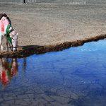 دومین مسابقه ملی نگاه سرخ - سیدرضا مهری ، راه یافته به بخش اصلی:(عکس عاشورایی) الف) دوربین عکاسی | نگارخانه چیلیک | ChiilickGallery.com