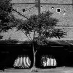 سومین جشنواره عکس فیروزه - مجید شقاقی فلاح | نگارخانه چیلیک | ChiilickGallery.com