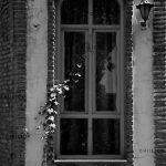 سومین جشنواره عکس فیروزه - پگاه مترصد | نگارخانه چیلیک | ChiilickGallery.com