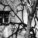 جشنواره استانی عکس پیرتاکستان - حسین میرکمالی | نگارخانه چیلیک | ChiilickGallery.com