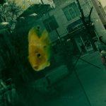 جشنواره استانی عکس پیرتاکستان - مجید یوسفی ، شایسته تقدیر | نگارخانه چیلیک | ChiilickGallery.com