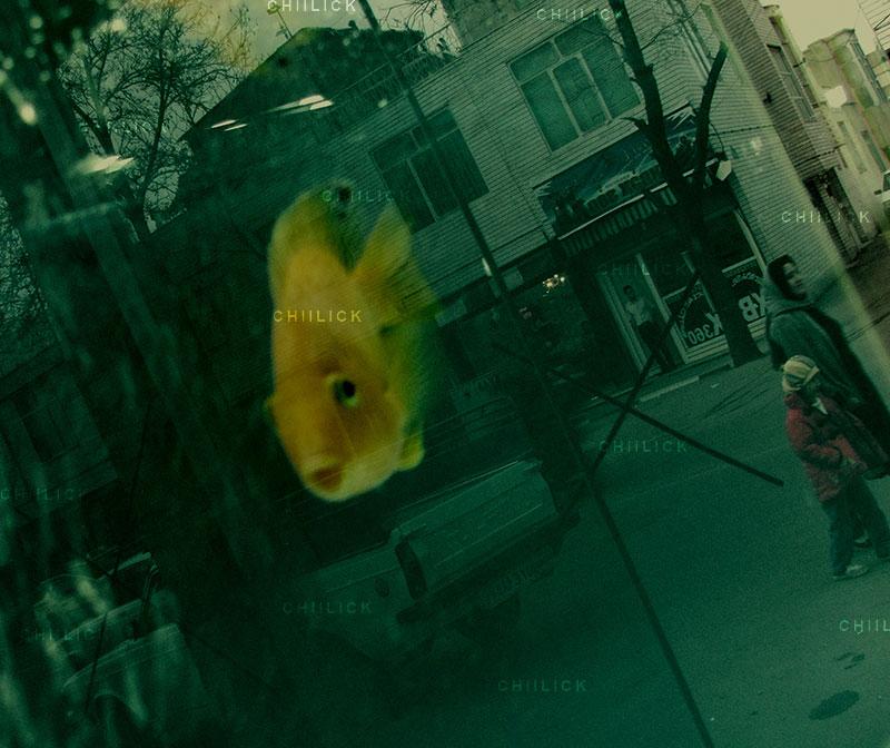 جشنواره استانی عکس پیرتاکستان - مجید یوسفی ، شایسته تقدیر   نگارخانه چیلیک   ChiilickGallery.com
