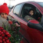 کودکان گل فروش - منصوره معتمدی | نگارخانه چیلیک | chiilickgallery.com