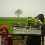 نخستين جشنواره عكس گلستانه - امین خسروشاهی ، رتبه دوم در بخش الف با موضوع: کودکان خیابانی و بیسرپرست | نگارخانه چیلیک | ChiilickGallery.com
