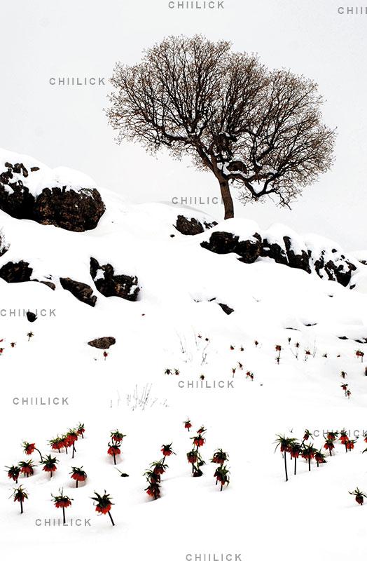 دومین جشنواره گرانتر از طلا - علی حسن فروغی | نگارخانه چیلیک | ChiilickGallery.com