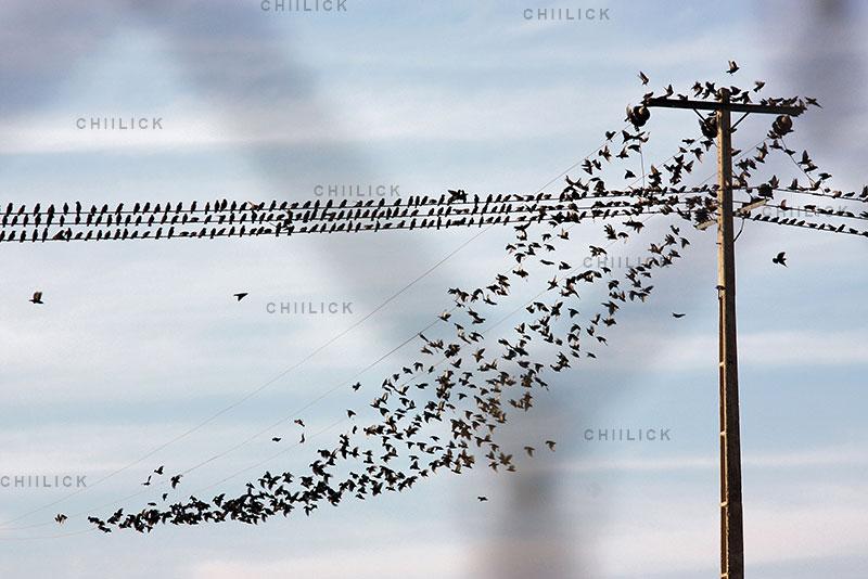 دومین جشنواره گرانتر از طلا - جمشید فرجوندفردا | نگارخانه چیلیک | ChiilickGallery.com