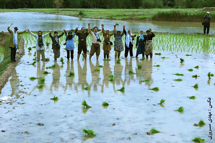 74- تور عکاسی از شالیکاران | پایگاه عکس چیلیک www.chiilick.com