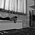 دومین جشنواره گلستانه - حسین نیک مهر ، راه یافته به بخش ب | نگارخانه چیلیک | ChiilickGallery.com