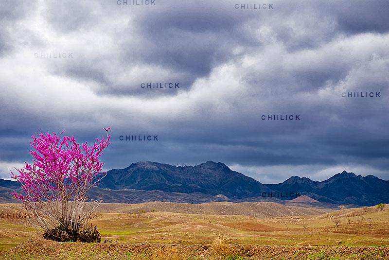 جشنواره عکس کوهستان بینالود - سیدعلی حسینی فر | نگارخانه چیلیک | ChiilickGallery.com