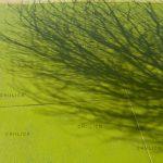 نمایشگاه سالانه عکاسان قزوین - سعید رنجبر | نگارخانه چیلیک | ChiilickGallery.com
