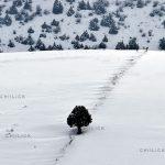 جشنواره عکس کوهستان بینالود - جاوید تفضلی | نگارخانه چیلیک | ChiilickGallery.com