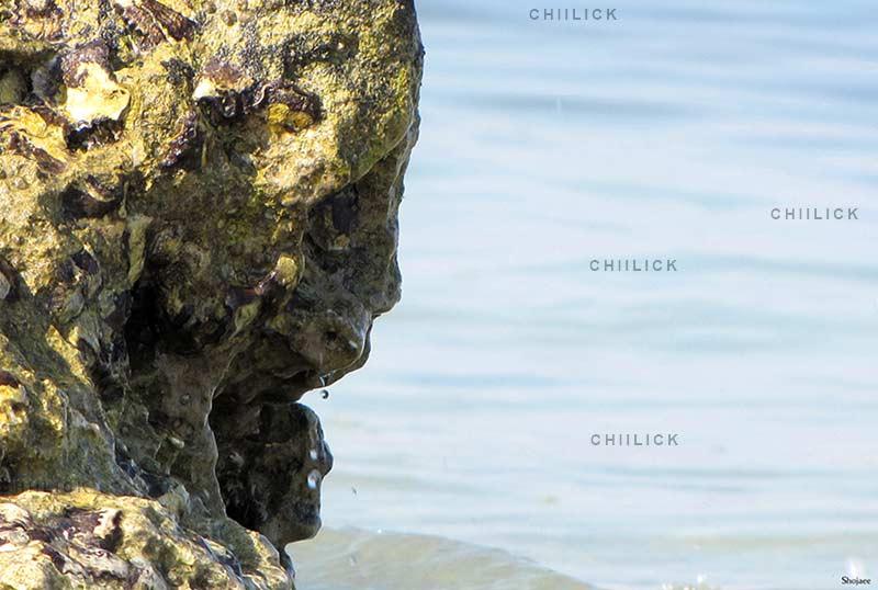 پلک زدن میان ماهی ها - زمان شجایی   نگارخانه چیلیک   ChiilickGallery.com