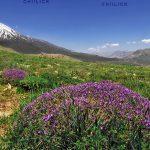 جشنواره عکس کوهستان بینالود - سهیل زندآذر | نگارخانه چیلیک | ChiilickGallery.com