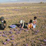 جشنواره ملی عکس تعاون - علی اصغر فلاح چمن آباد ، راه یافته به نمایشگاه در بخش آماتور | نگارخانه چیلیک | ChiilickGallery.com