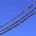 جشنواره محیط زیست مازندران - اصغر عالیشاه | نگارخانه چیلیک | ChiilickGallery.com