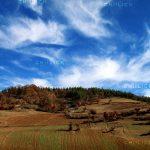 جشنواره محیط زیست مازندران - حسین بهرامی | نگارخانه چیلیک | ChiilickGallery.com