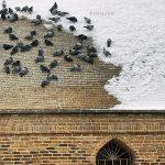 چهارمین جشنواره ایران شناسی - داوود شیخ الاسلامی ، شایسته تقدیر | نگارخانه چیلیک | ChiilickGallery.com