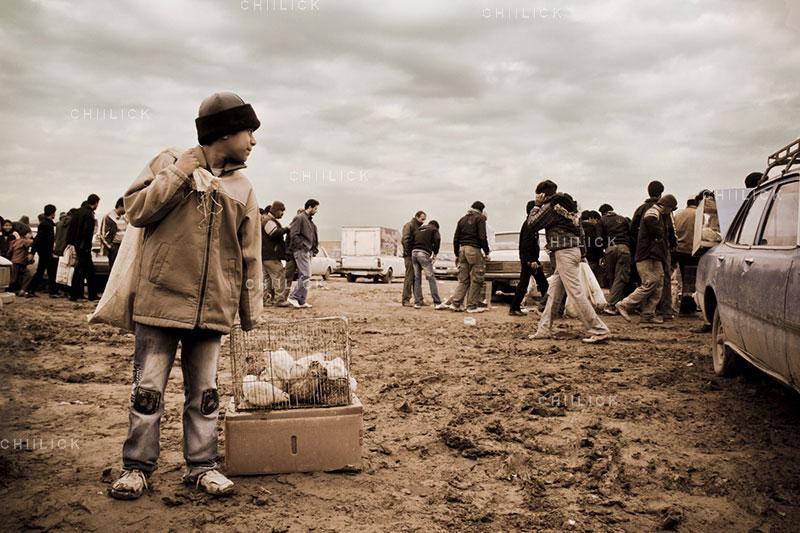 دومین جشنواره گلستانه - حمید سبحانی ، راه یافته به بخش الف   نگارخانه چیلیک   ChiilickGallery.com