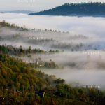 جشنواره محیط زیست مازندران - حسین شفیع نیا | نگارخانه چیلیک | ChiilickGallery.com