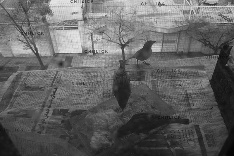 نمایشگاه سالانه عکاسان قزوین - خاطره بابایی | نگارخانه چیلیک | ChiilickGallery.com