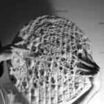 اولین نمایشگاه عکس نان - مهدی محمدی | نگارخانه چیلیک | ChiilickGallery.com