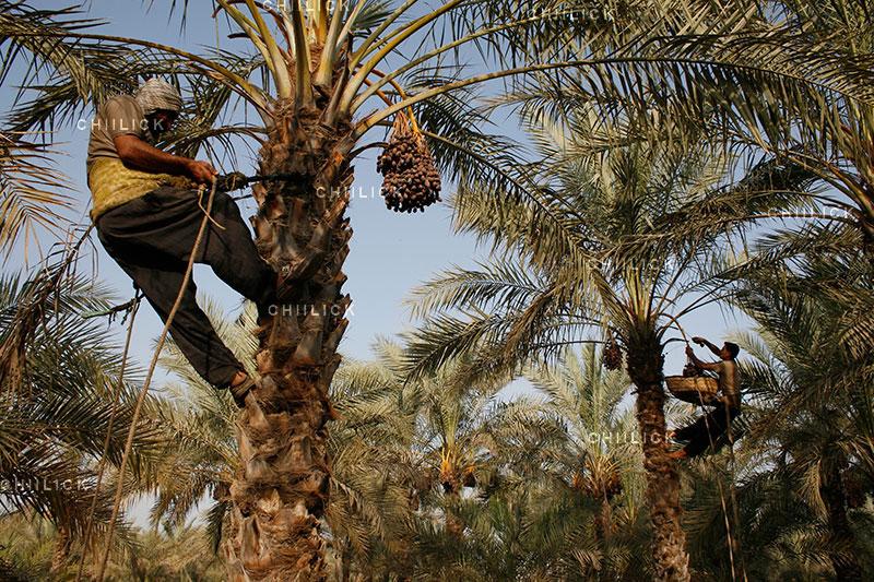جشنواره ملی عکس تعاون - محمد یوسفی ، راه یافته به نمایشگاه در بخش آماتور | نگارخانه چیلیک | ChiilickGallery.com