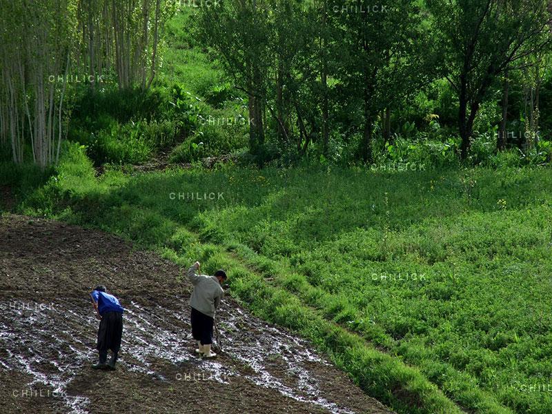 جشنواره ملی عکس تعاون - محسن ابراهیمی ، راه یافته به نمایشگاه در بخش آماتور | نگارخانه چیلیک | ChiilickGallery.com