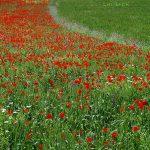 جشنواره محیط زیست مازندران - نرجس خاتون اندرواژ | نگارخانه چیلیک | ChiilickGallery.com