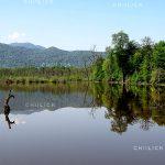 جشنواره محیط زیست مازندران - آسیه رضوانی | نگارخانه چیلیک | ChiilickGallery.com