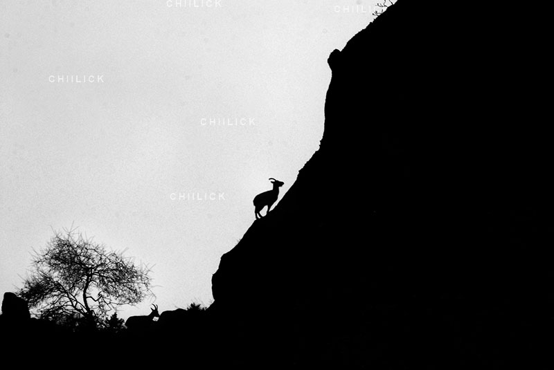 جشنواره عکس ایران شناسی - آرش شادمند ، راه یافته به بخش طبیعت | نگارخانه چیلیک | ChiilickGallery.com