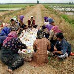 جشنواره ملی عکس تعاون - زهرا عابدی ، راه یافته به نمایشگاه در بخش آماتور | نگارخانه چیلیک | ChiilickGallery.com