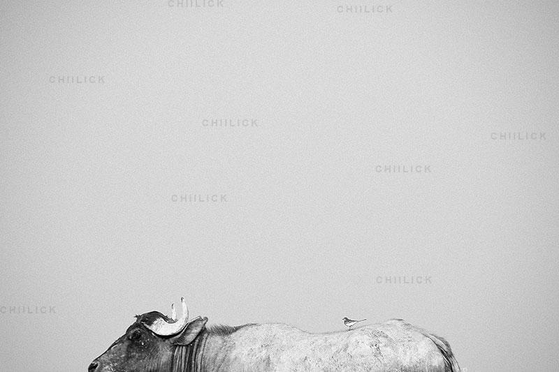 چهارمین جشنواره عکس زمان - سجاد آورند ، نگاه آزاد و خلاق به مفهوم زمان   نگارخانه چیلیک   ChiilickGallery.com