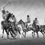 نخستین نمایشگاه صنعت اسب - مجید محرمخانی ، رتبه دوم | نگارخانه چیلیک | ChiilickGallery.com