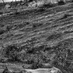 نخستین نمایشگاه صنعت اسب - داريوش منصوری | نگارخانه چیلیک | ChiilickGallery.com