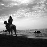 نخستین نمایشگاه صنعت اسب - معصومه شمس | نگارخانه چیلیک | ChiilickGallery.com