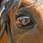 نخستین نمایشگاه صنعت اسب - مازیار اسدی | نگارخانه چیلیک | ChiilickGallery.com